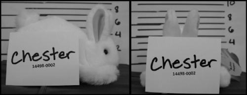 chester-mug-shot