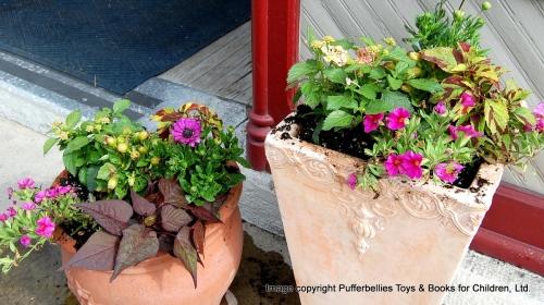 Plants outside Pufferbellies