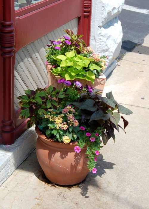 Flowerpots with sweet potato vine, petunias, coleus